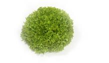 salade-3-vignette