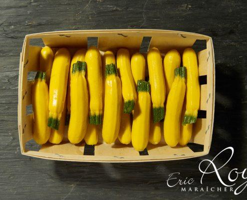 Barquette de mini-courgettes jaunes - LE JARDIN DES ROYS