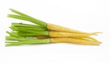 carottes-blanches-vignette