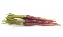 carottes-pourpres-vignette
