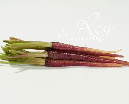 Carottes pourpres - Eric ROY maraîcher