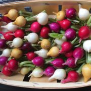 Légumes de Printemps - barquette de radis