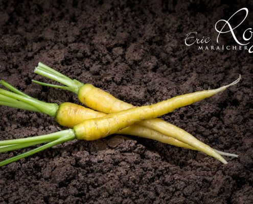 Mini carotte jaune