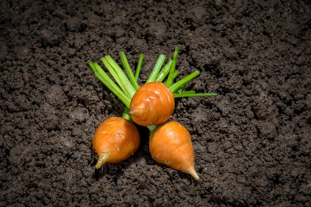 Mini carotte toupie