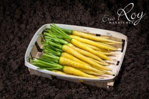 Mini carottes jaune en barquette
