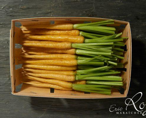 Barquette de mini-carottes jaunes - LE JARDIN DES ROYS