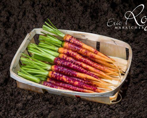 Mini carottes pourpre en barquette