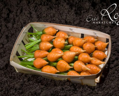 Mini carottes toupie en barquette