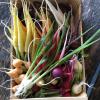 Méli-mélo de mini-légumes du moment - colis 30x20cm