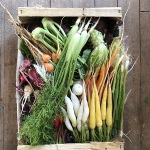 Méli-mélo de mini-légumes du moment - Colis 40x30