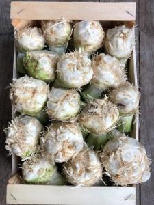 Celeri rave du jardin d'Eric Roy